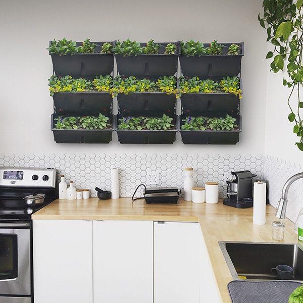 Gardarica green wall