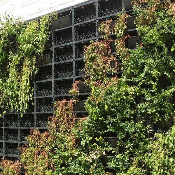 Gardarica Living Wall